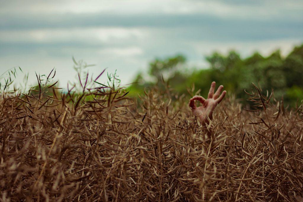 Mano de niño saliendo de un trigal indicando que todo está bien
